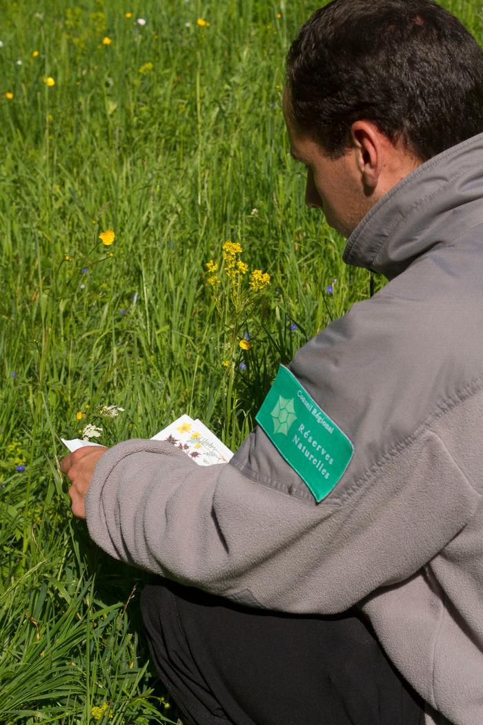 initiation a l'identification d'especes florales comestibles